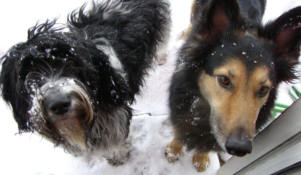 Hermine und Ylvi Harmonic Dogs