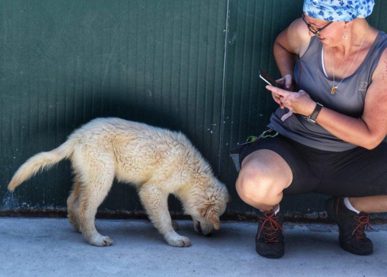 Hundehilfe Mariechen in einem Tierheim in Italien