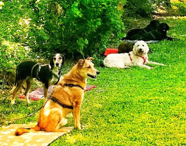 Hunde Grundlagentraining Harmonic Dogs Bayreuth