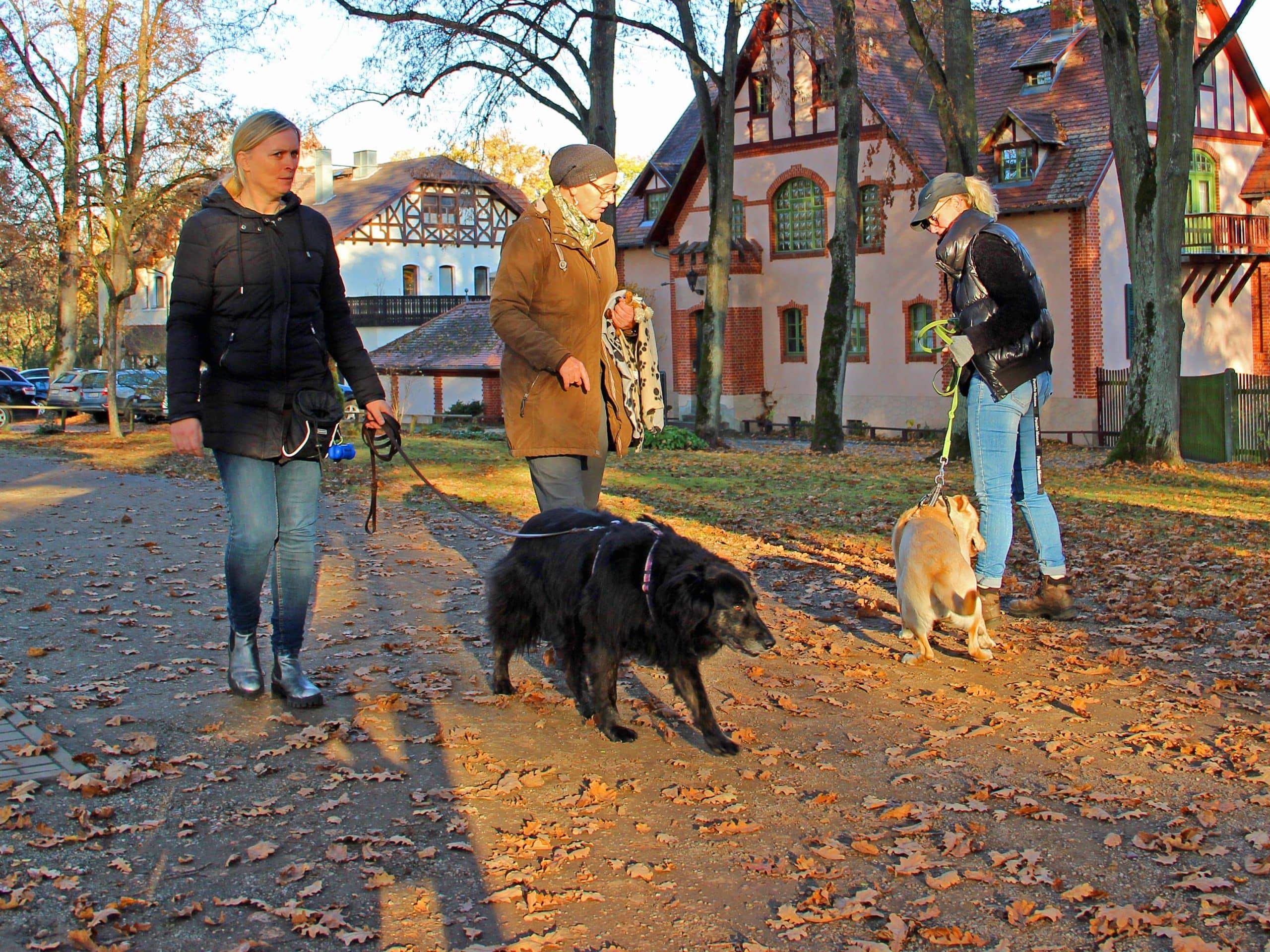 Gruppenstunde Harmonic Dogs Bayreuth
