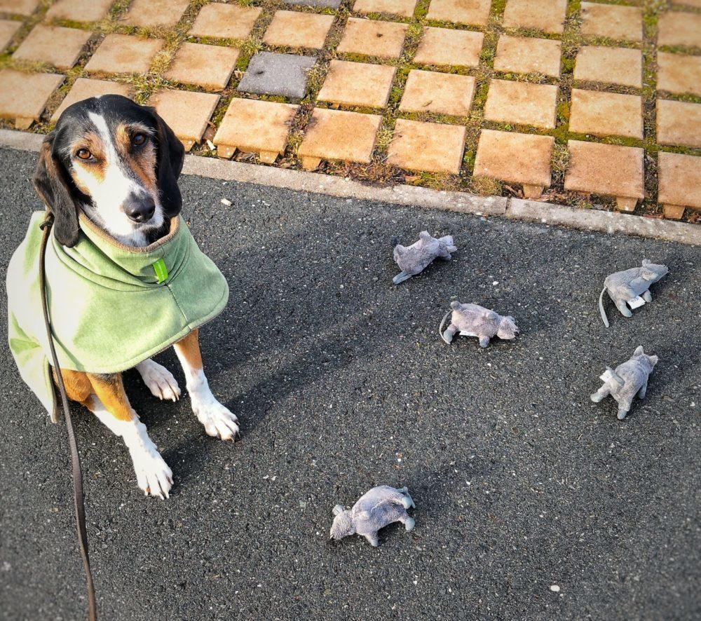 Hund mit Stoffmäusen zur artgerechten Beschäftigung